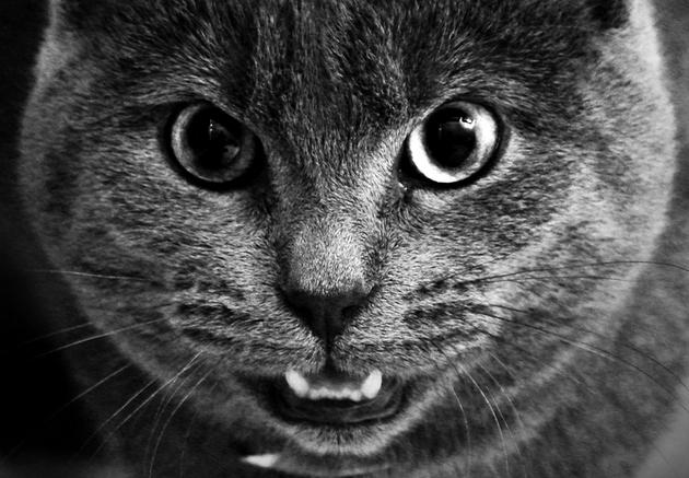 Złość (fot. Tobias Toft, sxc.hu)